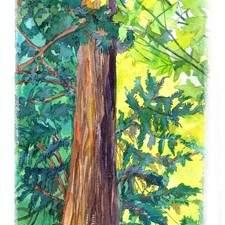 Irina Sagatelian Nanaimo Tree 61 91a