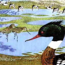 Duck in estuary viewed by bird watchers