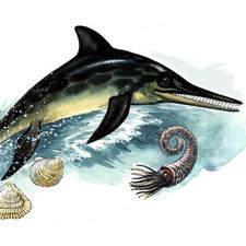 Similar to dolphin