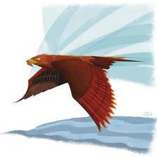 001 Bh Davidhurtado Hawk Digital