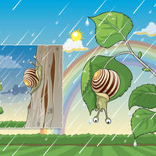 Snail Ion The Rain1