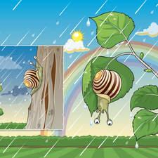 Snail Ion The Rain1
