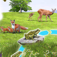 Wallchart showing wildlife life cycles