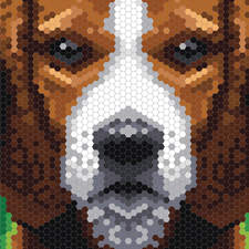 Dog Hexagons   Example1