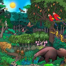 Rain Forest Original Tinta  Color Baja Copy