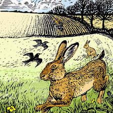 Hare runs through field