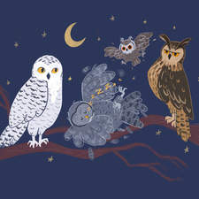 A Peck of Owls - an illustration from a personal project