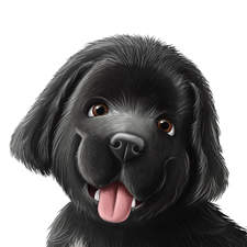 A sweet Newfoundland puppy - character for a children book.