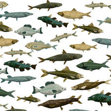Melusine Fishes 72dpi