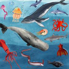 Sea Diagram 72dpi