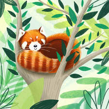 Red Panda Sleeping in a Tree - Personal Work