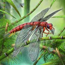 Meganeura, prehistoric dragonfly