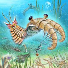 Anomalocaris,prehistoris predator