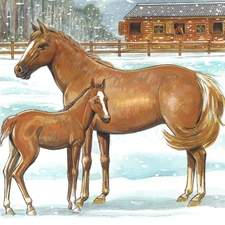 Horses, animals, winter scene, snow