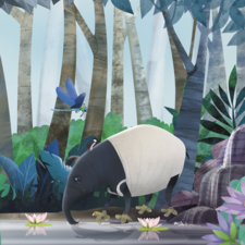 Sad tapir drinking from the stream