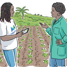 Commissioned by Hodder Education for book on Agriculture in Jamaica