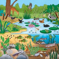 Pond Life Artwork