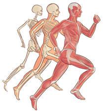 The human body - Educational illustrations