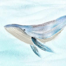 Humpback Whale swimming through the sea. Pencil drawing. Soft finish illustration.