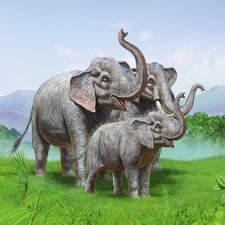 Animal illustration Book title: Do elephants get hot?  Publisher: HARPERCOLLINS PUBLISHERS Ltd.