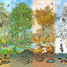 the four seasons in one scene with plants and animals near New York