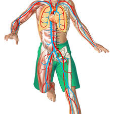 various anatomical details in the body of a running boy