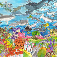 Many different creatures live in the Coral Reef.