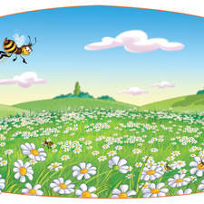 bees flying over daises