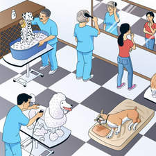 Illustration of Hispanic Dog grooming salon for US ELT book.