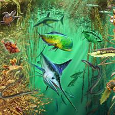 Wildlife of Sargasso Sea