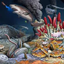 Wildlife of Deep Sea