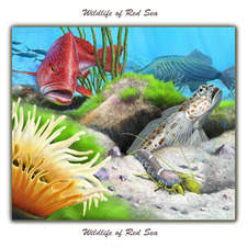 Red Sea Bass and Spotted Shrimpgoby