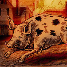 Etching style pig for Flaming Pig Irish Liqueur