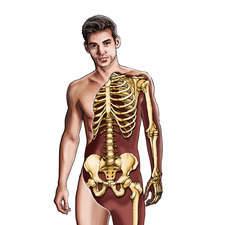 Human Body Cut-away